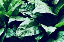 Foglie nel giardino, fondo fresco delle foglie verdi alla luce solare del giardino Struttura delle foglie verdi, foglia della fel Immagini Stock