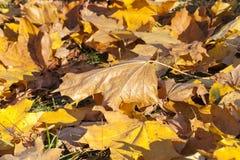 Foglie nel parco di autunno Fotografia Stock Libera da Diritti