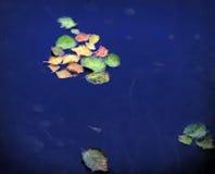 Foglie nell'acqua Fotografia Stock Libera da Diritti