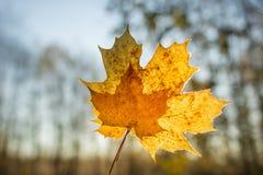 Foglie nella foresta di autunno Immagini Stock