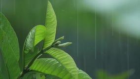 Foglie nella pioggia al rallentatore stock footage