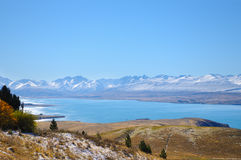 Foglie o piante sulla neve bianca della montagna nell'inverno, posti di paradiso in Nuova Zelanda Fotografie Stock Libere da Diritti
