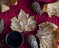 Foglie, pinecones e tè su un rosso robusto immagine stock libera da diritti