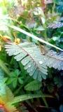 foglie presto Fotografia Stock Libera da Diritti