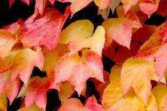 Foglie, primo piano sulle foglie con i colori di autunno fotografia stock