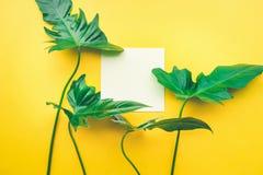 Foglie reali con il fondo bianco dello spazio della copia Botanico tropicale fotografia stock libera da diritti