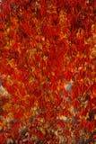 Foglie rosse Fotografia Stock Libera da Diritti