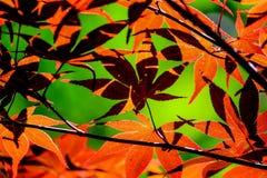 Foglie rosse con bella ombra Fotografie Stock Libere da Diritti