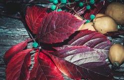 Foglie rosse dell'uva e frutti di una cotogna sul vecchio bl girato Fotografia Stock