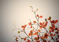 Foglie rosse - filtro d'annata da effetto Fotografia Stock