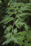Foglie scolpite verde di erba, bei ambiti di provenienza, Immagini Stock