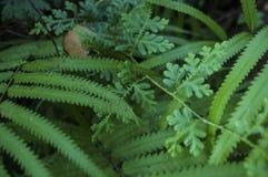 Foglie scolpite verde di erba, bei ambiti di provenienza, Fotografie Stock Libere da Diritti