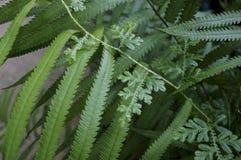 Foglie scolpite verde di erba, bei ambiti di provenienza, Fotografia Stock