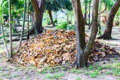 Foglie secche da uso per fertilizzante organico, bio- giardinaggio del parco pubblico Immagini Stock Libere da Diritti