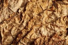 Foglie secche del tabacco come fondo Fotografia Stock