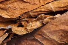 Foglie secche del tabacco come fondo Fotografie Stock Libere da Diritti