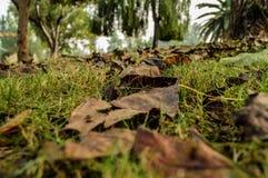 Foglie secche sparse durante la stagione di caduta Fotografia Stock Libera da Diritti