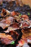 Foglie secche sulla terra Fondo utile Stagione di autunno dietro l'angolo immagini stock libere da diritti