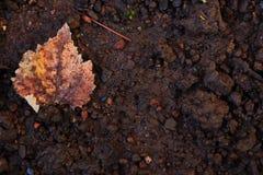 Foglie secche sulla terra Fondo utile Stagione di autunno dietro l'angolo fotografia stock libera da diritti