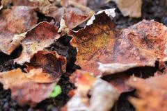 Foglie secche sulla terra Fondo utile Stagione di autunno dietro l'angolo immagine stock libera da diritti