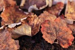 Foglie secche sulla terra Fondo utile Stagione di autunno dietro l'angolo fotografie stock
