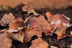 Foglie secche sulla terra Fondo utile Stagione di autunno dietro l'angolo fotografie stock libere da diritti