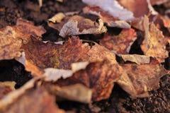 Foglie secche sulla terra Fondo utile Stagione di autunno dietro l'angolo fotografia stock