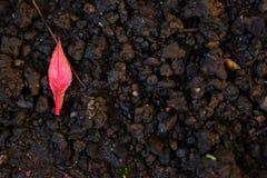 Foglie secche sulla terra Fondo utile Stagione di autunno dietro l'angolo immagine stock