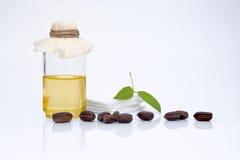 Foglie, semi ed olio chinensis di Simmondsia del jojoba Fotografia Stock