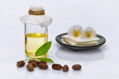 Foglie, semi ed olio chinensis di Simmondsia del jojoba Immagini Stock Libere da Diritti
