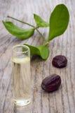 Foglie, semi ed olio del jojoba (Simmondsia chinensis) Immagini Stock