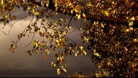 Foglie solari dell'albero e cielo misterioso archivi video