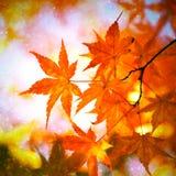 Foglie soleggiate e piovose di stagione di autunno fotografie stock libere da diritti