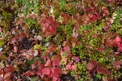 foglie sotto i piedi Fotografie Stock