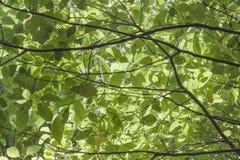 Foglie spesse degli alberi fotografia stock