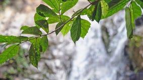 Foglie su priorità alta sulla cascata tropicale vaga della giungla Immagini Stock