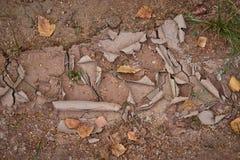 Foglie su terra incrinata asciutta fotografie stock