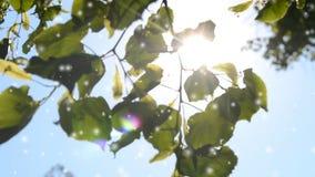 Foglie su un ramo contro un chiaro cielo blu con splendere del sole, archivi video