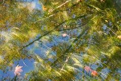 Foglie sull'acqua Fotografia Stock Libera da Diritti