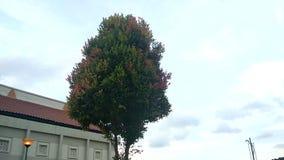 Foglie sull'ondeggiamento dell'albero a causa del vento stock footage