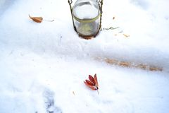 Foglie sulla neve Fotografia Stock