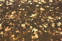 Foglie sulla strada, Bloomsbury, Londra, Regno Unito immagine stock