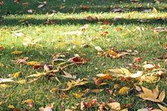 Foglie sulla terra in autunno come fondo immagini stock libere da diritti