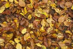 Foglie sulla terra nella foresta di autunno Fotografia Stock Libera da Diritti