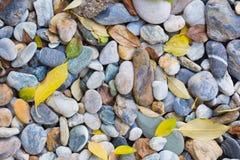 foglie sulle rocce Immagini Stock Libere da Diritti
