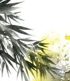 Foglie tropicali del bambù Fotografia Stock