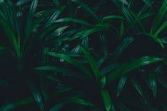 Foglie tropicali del fondo botanico scuro, sbiadite Fotografia Stock Libera da Diritti