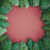 foglie tropicali del renderr 3d, alocasia, fondo rosa illustrazione vettoriale