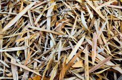 Foglie tropicali di bambù su terra fotografia stock libera da diritti