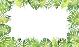 Foglie tropicali di verde della struttura del confine dell'acquerello monstera, foglie della palma, foglie del banano royalty illustrazione gratis
